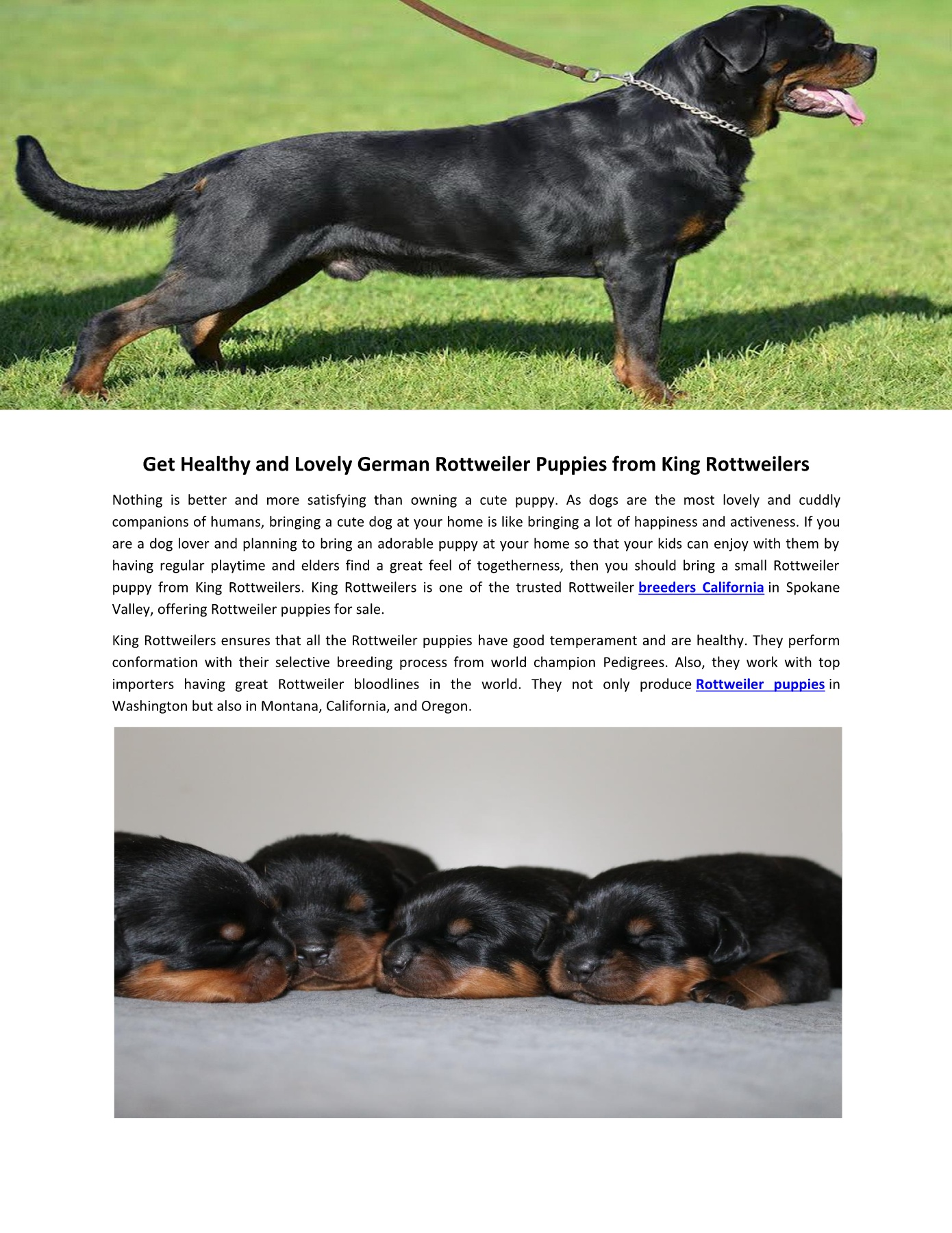 King Rottweilers Pages 1 - 2 - Text Version | AnyFlip