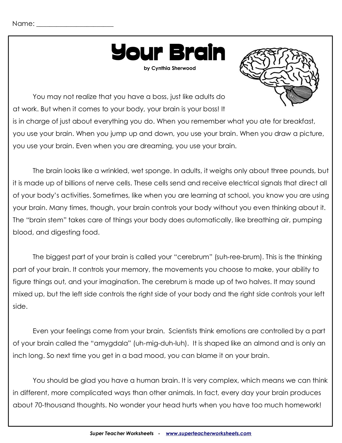 Your Brain - superteacherworksheets.com