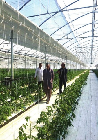 2 m tube greenhouse rail with clamps for Aluminium greenhouses support plants