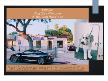 Local Dog Groomers Near Me Pages 1 10 Text Version Anyflip