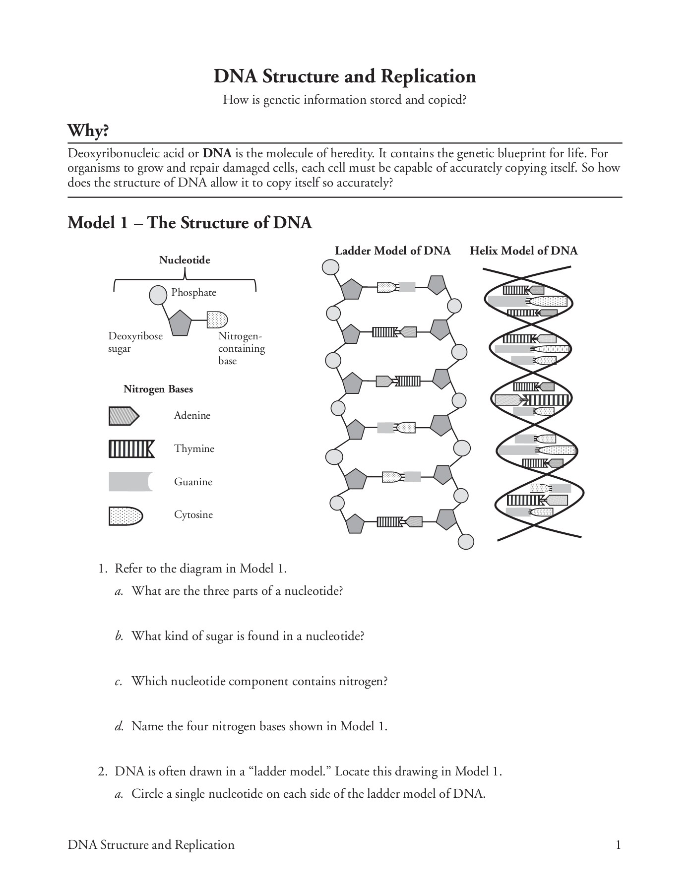 DNA Structure and Replication Pages 1 - 5 - Text Version ...