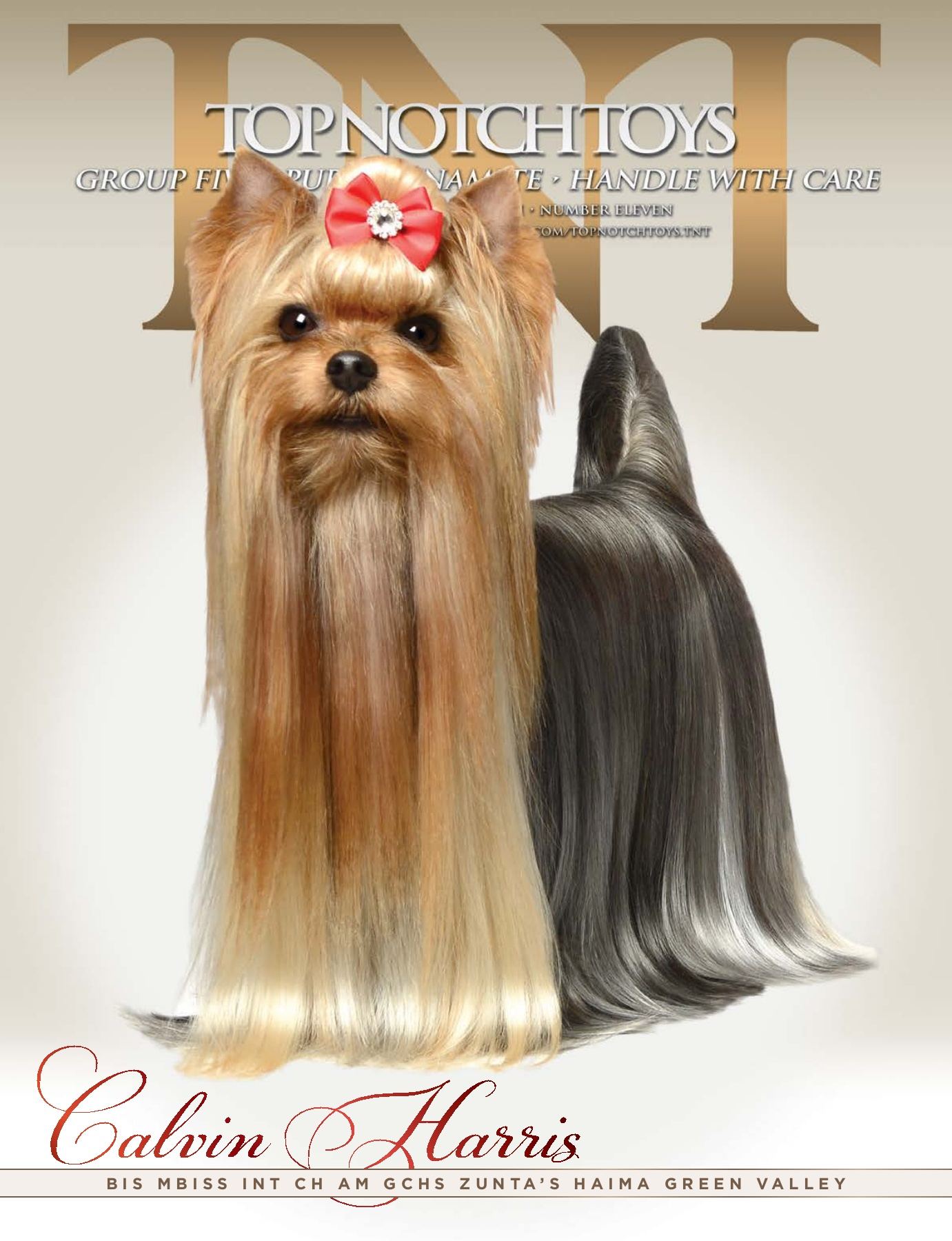 Yorkshire Terrier PNG - yorkshire-terrier-dog yorkshire-terrier ... | 1800x1381